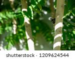 close up fern leaves with... | Shutterstock . vector #1209624544