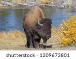 Yellowstone National Park  Wy   ...