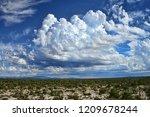 the sonora desert in central... | Shutterstock . vector #1209678244