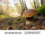 mushroom | Shutterstock . vector #120969307