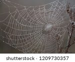 web in a nature background | Shutterstock . vector #1209730357