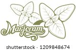 hand drawn marjoram leaves ... | Shutterstock .eps vector #1209848674
