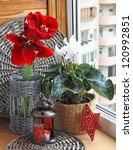 Cyclamen and red hippeastrum on windons in winter. - stock photo