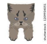 a grey colored wildcat lives... | Shutterstock .eps vector #1209934051