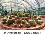 Cactus In The Glasshouse At...