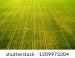 field. green farm field with... | Shutterstock . vector #1209973204