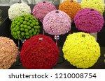 Colourful Chrysanthemum Balls...
