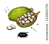 baobab vector superfood drawing.... | Shutterstock .eps vector #1210031731