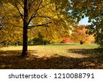 amazing nature and fall concept ... | Shutterstock . vector #1210088791