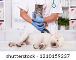 Stock photo young animals kitten and puppy dog at the veterinary doctor being examined and treated focus on 1210159237