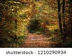 footpath through an autumn...   Shutterstock . vector #1210290934
