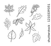 autumn leaves on the white... | Shutterstock . vector #1210339351