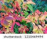 colorful leafs on blueberry... | Shutterstock . vector #1210469494
