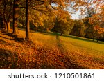 spring forest landscape with... | Shutterstock . vector #1210501861