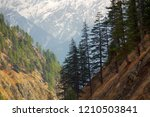 pre himalayas forest consists... | Shutterstock . vector #1210503841