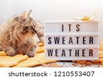 comfort warm outfit for cold... | Shutterstock . vector #1210553407