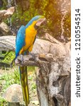 Colorful Parrots Are On The...