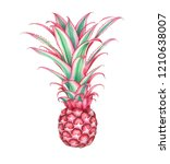 Mini Pink Pineapple Isolated On ...