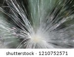 nature abstract  delicate white ...   Shutterstock . vector #1210752571