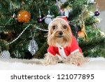 cute yorkshire terrier in front ... | Shutterstock . vector #121077895