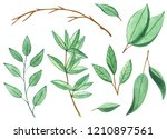 watercolor green leaf set.... | Shutterstock . vector #1210897561