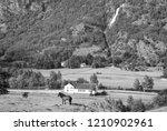 horse on grass pasture on...   Shutterstock . vector #1210902961