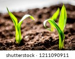 concept appearance of life  ...   Shutterstock . vector #1211090911