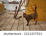 Stock photo small black yellow brown coloured striped cute kitten with light yellow eyes and white wiskers 1211217511