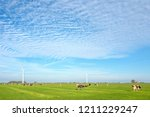 Pasture Near Lemmer With...