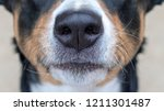 Appenzeller Mountain Dog  Dog...