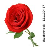 Stock photo red rose closeup isolated on white background 121130467