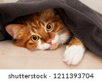 Stock photo cat peeking out from under blanket 1211393704