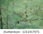 beautiful background of berries ... | Shutterstock . vector #1211417071