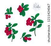 set with lingonberries. colored ... | Shutterstock .eps vector #1211424067