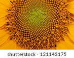 Middle Of Sunflower Close Up