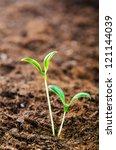 green seedlings in new life... | Shutterstock . vector #121144039
