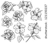 sketched flowers in black and... | Shutterstock . vector #121150237