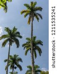 beautiful tropical imperial...   Shutterstock . vector #1211535241