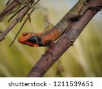 male lizars make red and black... | Shutterstock . vector #1211539651