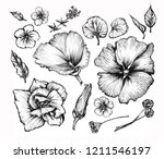 botanical graphic illustration... | Shutterstock . vector #1211546197