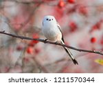 long tailed tit or long tailed... | Shutterstock . vector #1211570344