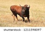 Big Bull Running In The Field