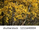 indian summer. golden fall. a... | Shutterstock . vector #1211640004