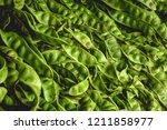 bitter beans texture and... | Shutterstock . vector #1211858977
