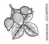 dog rose  sketch vintage... | Shutterstock . vector #1211895931
