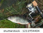 freshwater perch and fishing... | Shutterstock . vector #1211954404