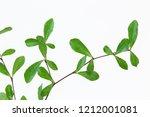 beautiful ivory coast almond...   Shutterstock . vector #1212001081