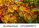 autumn landscape photography ... | Shutterstock . vector #1212042871