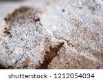 white brown forest ground | Shutterstock . vector #1212054034