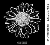 decorative chamomile  flower ... | Shutterstock . vector #1212067561